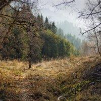 Прогулка в октябре... :: LudMila