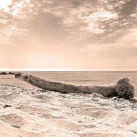 Выброшен на берег :: Alexander Andronik