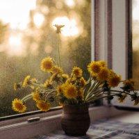 Маленькие солнышки :: Ирина