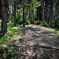 Утреннее лето в лесу :: alecs tyalin