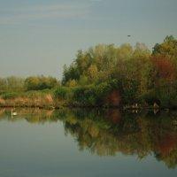 А белый лебедь на пруду... :: Михаил Пахомов