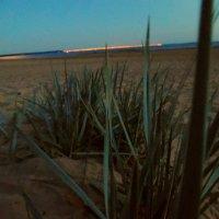 Вечер у залива. :: Анастасия Ларионова