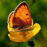 летающий цветок 4 :: Александр Прокудин