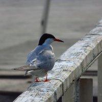 Птичка божия не знает ... :: Андрей Лукьянов