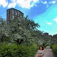 В саду. :: Александр Бабаев