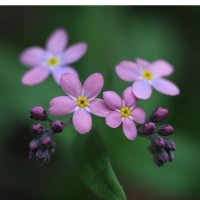 Милы и красивы :: Irina Fabien