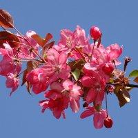 Цветущая весна :: Татьяна Георгиевна