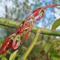 Обновление природы :: Лидия (naum.lidiya)