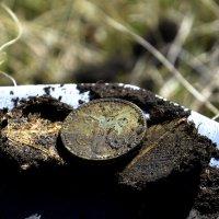 Очередная царская монетка... :: Дмитрий Петренко