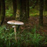 Где-то в лесу :: Алексей (GraAl)