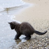Морской кот :: Мазутка