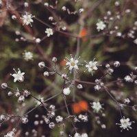 Портреты цветов... Перекати-поле... :: Сергей Леонтьев