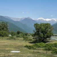 Алазанская долина :: Лариса Батурова
