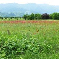 Цветы Грузии :: Наиля