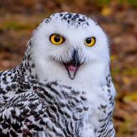 Загадочная птица :: Александр Попович