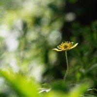 Солнечное изящество :: Ирина