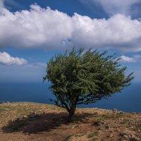 Дерево на Ильяс -Кая :: Виктор Фин