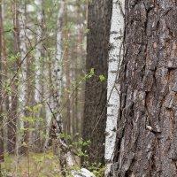 В лесу... :: Elena Wise