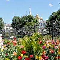 Красота буйного цветения, в садике возле Спаса на Городу, в Ярославле :: Николай Белавин