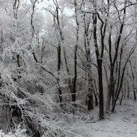 Зима. :: Slav51T