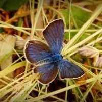 живой цветок на сухой траве :: Александр Прокудин