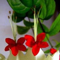 Цветы :: Vlad Сергиевич