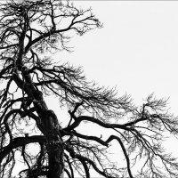 Дерево... :: Влад Никишин