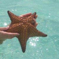 морская звезда :: ИРЭН@ Комарова