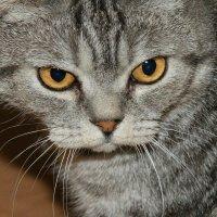 Кошка :: Александр Дик
