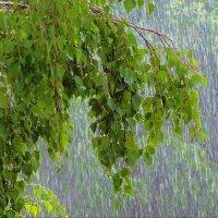 Летний дождь :: Елена Макарова