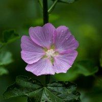Цветок :: Владимир Шадрин
