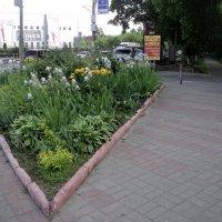 Треуголка клумба в Люберцах на ул. Смирновская! :: Ольга Кривых