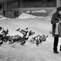 Погоня :: Денис Филатов