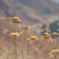 Природный горный гербарий :: Горный турист Иван Иванов