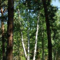 Утро в лесу :: nika555nika Ирина