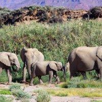Гиганты Африки. Намибиа. :: Jakob Gardok