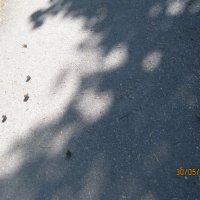 тень от деревьев :: Smit Maikl
