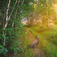 В лесу... :: Виктория Власова