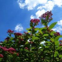 """Напитай меня красками, лето. Очаруй синевою небес...."" :: Galina Dzubina"