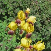Цветы двух цветов :: Дмитрий Никитин
