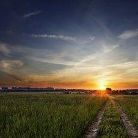 Утреннее поле . :: Va-Dim ...