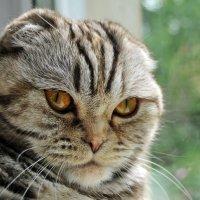 Портрет кошки. :: Лариса Вишневская