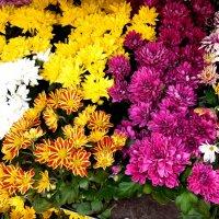 Цветочное ассорти :: Надежда