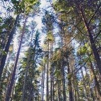 Лесные пейзажи :: Nikolay Monahov