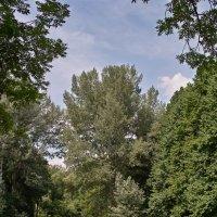 Лесной пруд. :: Андрий Майковский