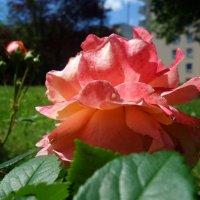 День в солнце, как в меду... :: Galina Dzubina