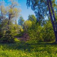 Майский день на северо-западе (3) :: Виталий