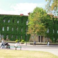 Дом заросший плющём в Гродно :: ofinogen