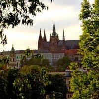 Прага сквозь листву! :: ирина