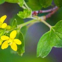 весеннее цветение :: Светлана SvetNika17